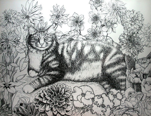 Pen and ink cat drawing - reclining Maine Coon cat