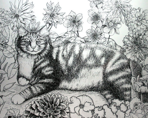 Maine Coon cat drawing category image