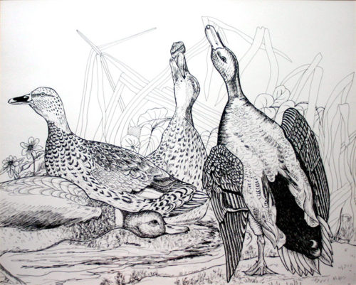 Mallard duck drawing created with pen and ink on paper